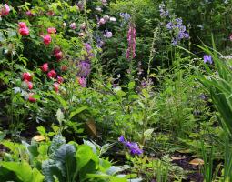 Přírodní zahrada s růžemi a náprstníky